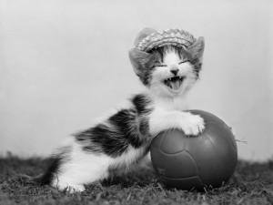 cat-playing-volleyball